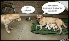 Boy George, Hetalia, Funny Cute, Growing Up, Funny Animals, Labrador Retriever, Funny Pictures, Lol, Memes