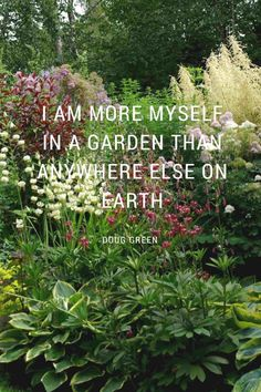 I've been growing perennial flowers my entire gardening life and they've been the backbone plants of every garden I've ever had. I don't think I'll ever get #GardenQuotes