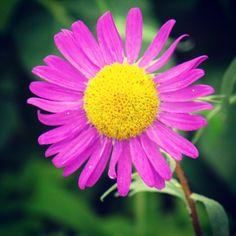 Flor do jardim da minha mãe