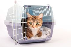 Finding the Perfect Cat Carrier – Choosing the Right Size Crate | petMD