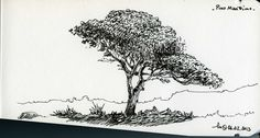 Pine Tree  Lamy Fountain Pen on Bahaus Sketchbook  February 2013