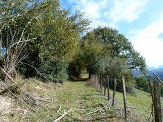 Après la ferme Escanda, (montagne basque).