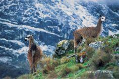 Huaraz - Highlands - Peru