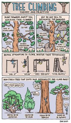 Master the lost of art of tree climbing: Theory and practice