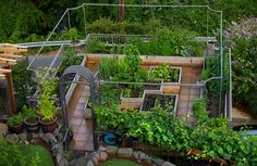 Its Vegetables With A View On This Magnolia Rooftop Garden