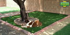 ProGreen artificial turf for dogs. It's odor free and your dogs won't be tracking mud into the house anymore. Artificial Grass For Dogs, Artificial Turf, Pet Grass, Dog Runs, Backyard Ideas, Mud, Pets, Gallery, House