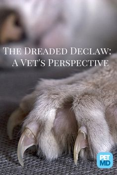 Most people don't know what is really involved in a declaw surgery for cats... Do you?