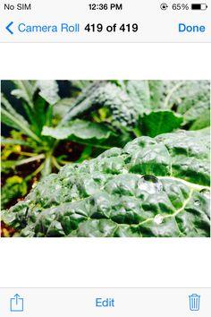 #byuh #garden