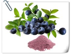 #Acai Extract #Acai #Berry, also called Euterpe badiocarpa, Euterpe oleracea, Palmaceae, its height is about 15-25 meters. The flowers are brown and purple, and it is growth in the Brazilian amazon rainforest. #Acai #Berry is considered as the hotest nutritious fruits, with rich antioxidizing agents.   http://www.apitechina.com/acai-extract