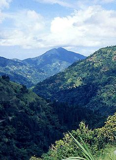 Breath in the mysterious and majestic Blue Mountains of Jamaica.