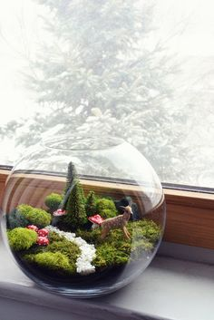 Moss fairy terrarium in goldfish bowl (cute in winter)