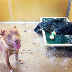 Down feathers everywurr by dleiner - He is adoptable from MCSPCA in Eatontown, NJ.