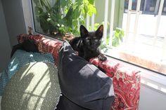 Nosso gato preto mascote - loja Maduu bolsas veganas do Brasil