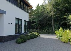 Residential landscape with bushes and stone driveway.