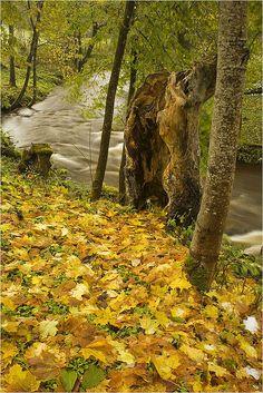 Võrumaa. Vana-Vastseliina. Piusa river by Tiina Gill