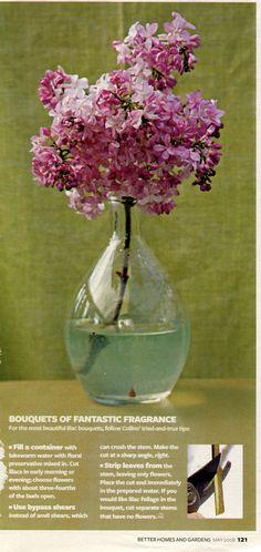 (BH 5/2008) Lilacs: Cutting for Indoor Bouquet | AllTogetherChanin