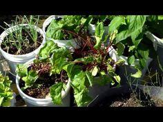 Brother Steve's Rain Gutter Garden Has become a Jungle!! Wow!