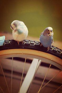 WE ♥ THIS! ----------------------------- Original Pin Caption: rollin