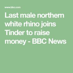 Last male northern white rhino joins Tinder to raise money - BBC News