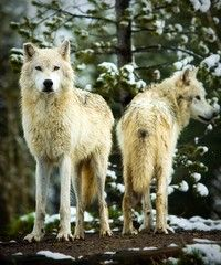 Nature - Week 8 Gallery - National Geographic Photo Contest 2011 #Photography