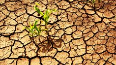 Climate Change Is Going to Wreak Havoc on World Agriculture
