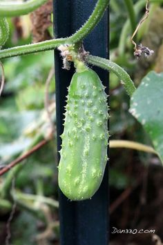 This is a Future Pickle. Find out how it was transformed.