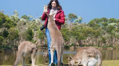 "Australians are known for their ""walkabouts,"" the rite of passage for young Aussies to travel the world after they finish school. While young Aussies roam the world, they're leaving an amazing country behind for tourists to enjoy their own ""walkabout."" Down Under lures backpackers with the Great Barrier Reef, the rugged Outback and the youthful cities of Sydney and Melbourne.  Australia"