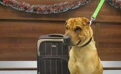 Dog Abandoned at Scottish Train Station With Suitcase of his Belongings