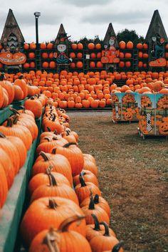 The Great Pumpkin Farm - The February Fox Halloween Season, Fall Halloween, Happy Halloween, Trendy Halloween, Halloween Witches, Halloween Quotes, Halloween Night, Cute Fall Wallpaper, Halloween Wallpaper