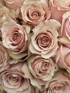 Quicksand Roses More