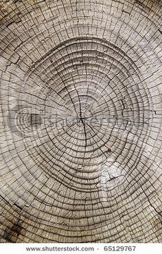 Old wood cut