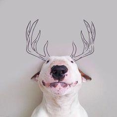 Bull Terrier – Les nouvelles photos Instagram de Rafael Mantesso et son adorable chien