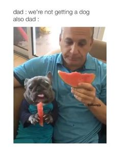 Cute Funny Animals, Cute Funny Dogs, Silly Dogs, Funny Animal Quotes, Cute Dogs And Puppies, Baby Puppies, Funny Animal Videos, Funny Animal Pictures, Cute Baby Animals