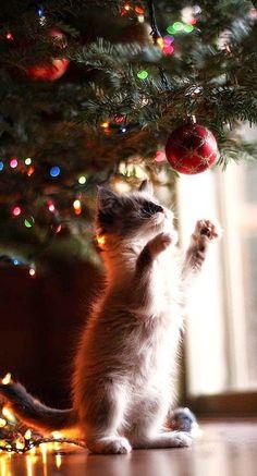 Cute Christmas kitten mischief