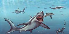 Descoberto um tubarão pré-histórico anormalmente grande que pode evidenciar um novo gênero
