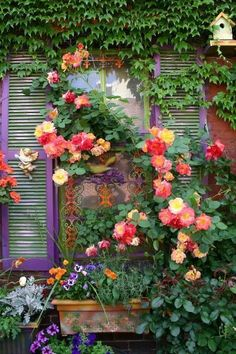Joseph's coat...climbing rose  ♥♥♥  truly the real thing....The most beautiful rose and blooms from spring to fall..... https://www.pinterest.com/lahana/flowers/