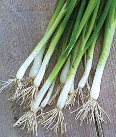 Onion, Evergreen Long White Bunch Organic Sun: Full Sun  Spread: 8  inches Height: 12-14  inches Days to Maturity: 120  days Sowing Method: Direct Sow