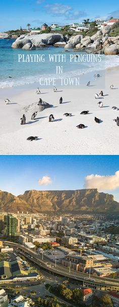 Here is the list of the best activities to do when visiting Cape Town, South Africa including playing with penguins at Boulder's Beach! Wildlife Fotografie, Boulder Beach, Namibia, Cape Town South Africa, Amazing Destinations, Travel Destinations, Africa Travel, Culture Travel, Travel Photos