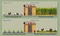 "Two yards, rotate chickens and crops! Wish I had the space!"" data-componentType=""MODAL_PIN"