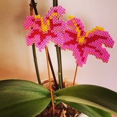 Orchids hama beads by red_sunlight