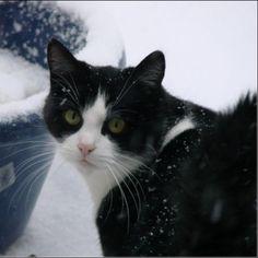 hetty overbeek met bobo - In de sneeuw!