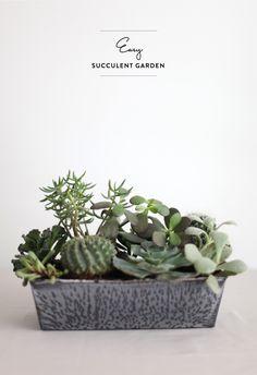 #garden, #succulent, #cactus, #diy, #potted-plants, #home-decor, #centerpiece, #vase, #plants