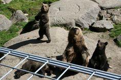 Ähtärin eläinpuisto on perustettu vuonna 1973 ja se on Suomen ensimmäinen luonnonmukainen eläinpuisto.