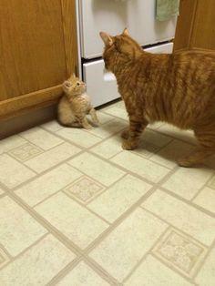 【猫画像】カツアゲの現場   猫知る http://www.neko-cats.net/2015/01/5094/ #cat #cats #neko #猫 #ねこ #ネコ #猫画像 #catphoto