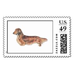 ==> reviews          Longhaired Dachshund Postage Stamps           Longhaired Dachshund Postage Stamps We have the best promotion for you and if you are interested in the related item or need more information reviews from the x customer who are own of them before please follow the link to see ...Cleck Hot Deals >>> http://www.zazzle.com/longhaired_dachshund_postage_stamps-172671413898607567?rf=238627982471231924&zbar=1&tc=terrest