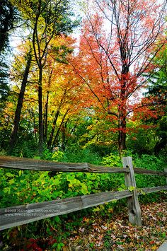 Autumn by jpnuwat, via Flickr