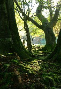 The Cruagh Wood in Rathfarnham, Ireland