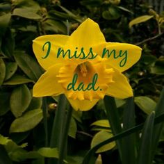 I remember when you got Mom and I all those daffodil bulbs... they were beautiful. You always did special things for me. Thank you Pops... you were the best! I'll never forget you.