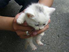 tiny kitten, so cute