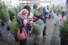Eco-Logisch | Adopteer een kerstboom. Adopteer een kerstboom. 's Winters worden ze opgehaald, 's zomers groeien ze lekker door op de biologische kwekerij. Zo kan een kerstboom tot wel vijf keer worden hergebruikt. En zie je je eigen boom jaar na jaar groeien.